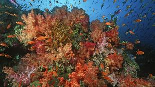 A fingó halak idézhetnek elő titokzatos mélytengeri zajokat