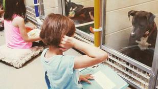 Sírásveszély! Iskolások olvasnak menhelyi kutyáknak