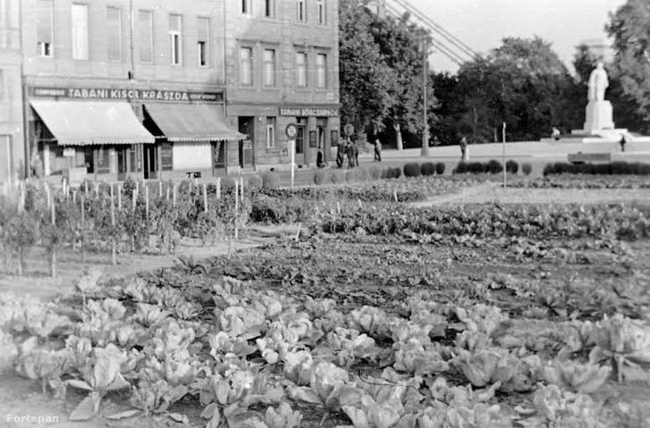 Döbrentei utca vége, háttérben Gömbös Gyula szobra 1942-bwn, amit a kommunisták 1944-ben felrobbantottak. No, de ami még izgalmasabb: a káposzta-ültetvény a vendéglátóipari-egység tövében.