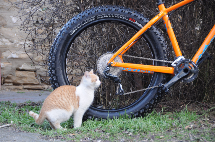 Ilyet még a macska sem látott