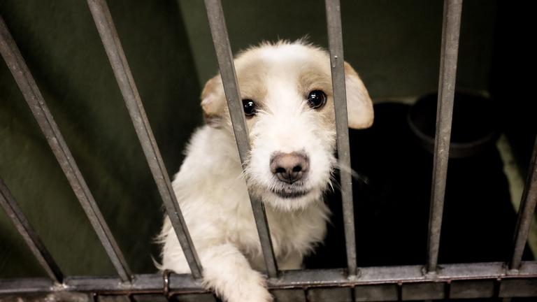A járvány miatt többen fogadnának örökbe kutyát