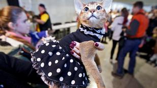 Kevés jobb dolog van az ukrán macskaszépségversenynél