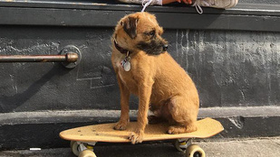 Mihalik Enikő kutyája tud gördeszkázni