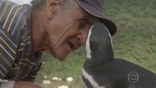 A pingvin, aki minden évben visszatér a megmentőjéhez