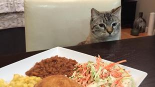 Nagyon fontos képek egy asztalnál ülő macskáról