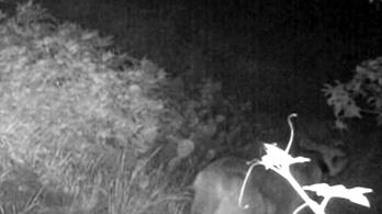 Puma társkereső oldalak Kanada