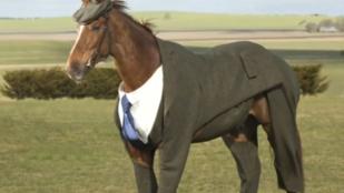 Akar látni egy lovat öltönyben?