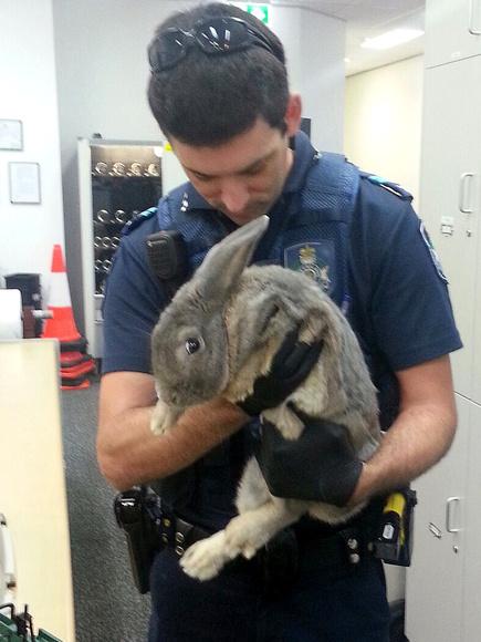 illegal-rabbit