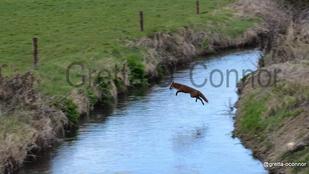 Ennyire élvezik a rókák a vadászidényt: semennyire