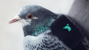 A cukicsapat, ami a levegő tisztaságáért felel
