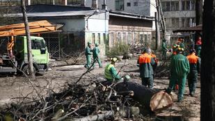 Aktivisták akadályozták meg a fakivágást a Városligetben