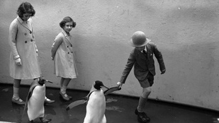 A kép, amin Erzsébet királynő pingvineket hajkurászott 1938-ban