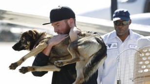 Öt hét után került elő a Csendes-óceánba zuhant kutya