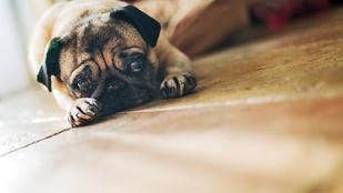 Idegmérget szórtak ki Újlipótvárosban a kutyák ellen