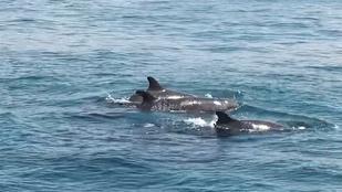 A delfin tényleg mindent megtett, hogy a turisták sose felejtsék el