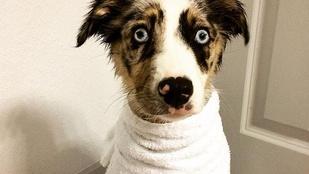 Az első fürdetésnél ért véget a kutya felhőtlen gyerekkora