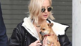 Nehéz eldönteni, Jennifer Lawrence vagy a kutyája szomorúbb