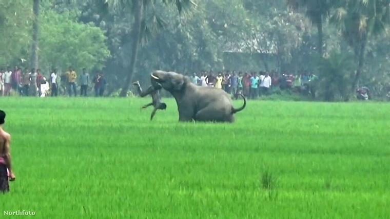 tk3s bm elephant attack 02465195