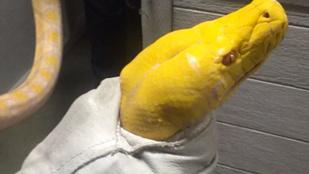 Pitonhajigálással állt bosszút a feldúlt vendég a sushibáron