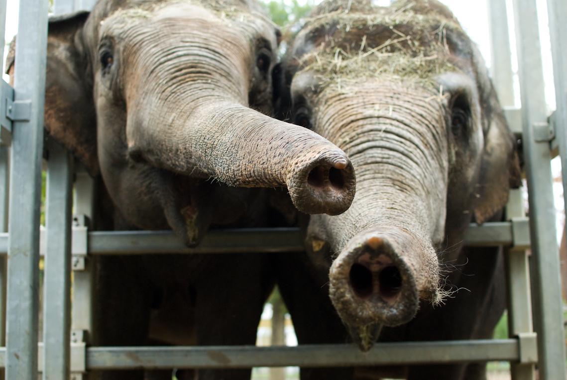 elefánt szerelem randi összekapcsolás és randevúk