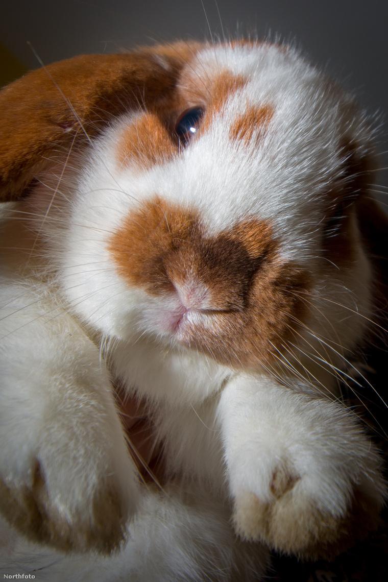 tk3s swns bloodthirsty bunny 01