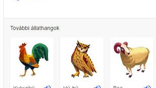 Kösz, Google: a japán disznó buu-val röfög