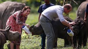Katalin és Vilmos elefántborjakat itatnak