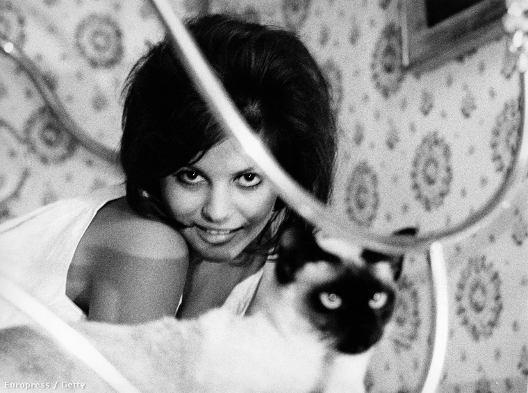 Claudia Cardinale és egy olasz macska