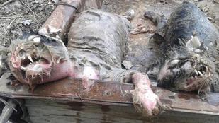 Vérmacskák mészároltak le jószágokat kazah falvakban