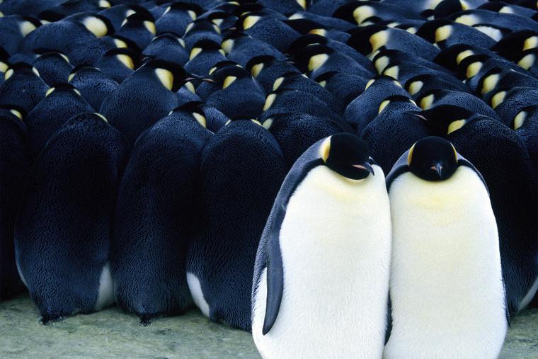 pinvinek menetelese02