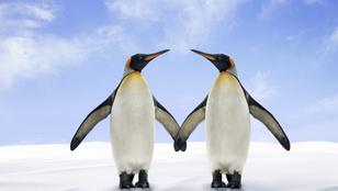 Romantikus véget ért a meleg pingvinpár története