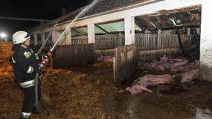 Száz állat pusztult el egy tűzben Láziban