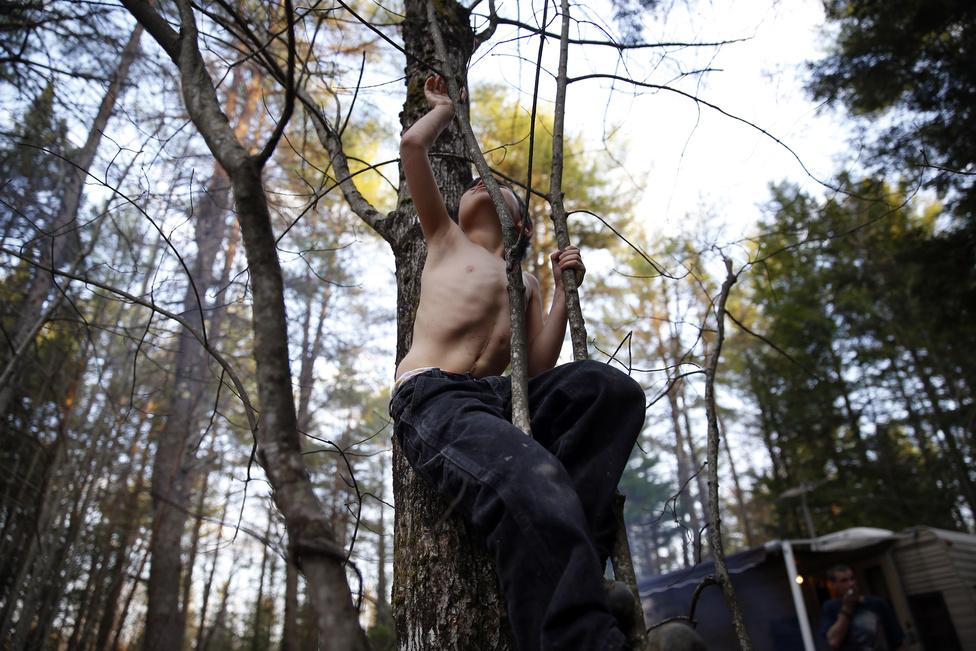 Strider egy fa ágain kapaszkodik felfelé a Maine-i ideiglenes otthonukhoz közeli erdőben, a hasán pedig az életmentő beavatkozások nyomai láthatóak: egy hosszú vágás a felsőtestén, és a cső helye, amin keresztül táplálták.