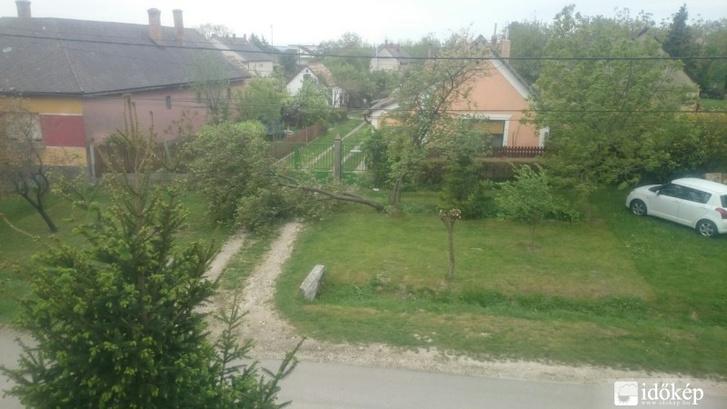 Kidőlt fa az Időkép olvasójának fotóján, Csóron.