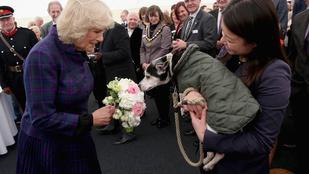 Napi royal: Mit keres egy kutya Kamilla hercegné szoknyája alatt?