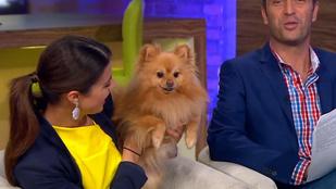 Voksán Virág kutyája szabotálta a Mokka riportját