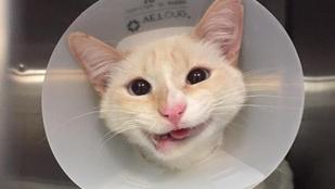 Már mosolyogni is tud Hercegnő, az elgázolt macska