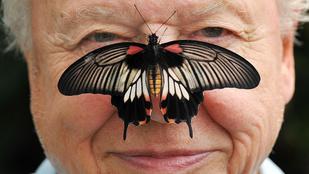 David Attenborough életét bárki megirigyelhetné