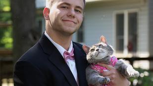Nincs csaja, a macskáját vitte a bálba