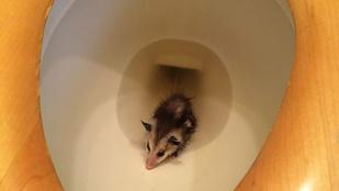 Ön mennyire kapna frászt, ha ezek a lények kászálódnának ki a vécéjéből?