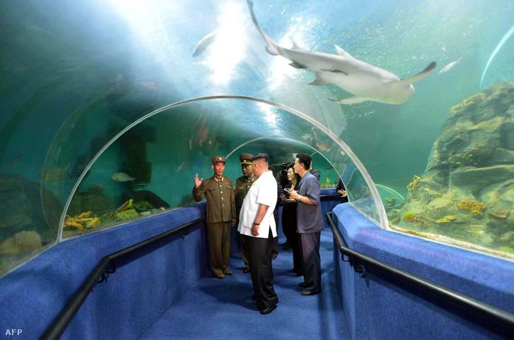 Kim Dzsongun egy akváriumot tekint meg.