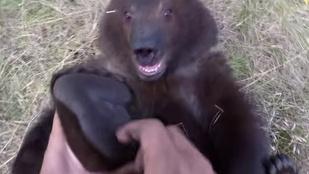 Ez a medvebocs imádja, ha a tappancsát csikizik