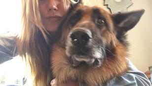 Instagramhíradó: szép nők jönnek, kutyákkal!