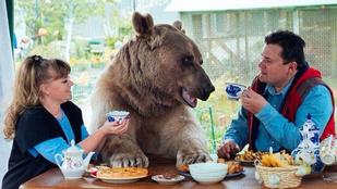 Ismerje meg Sztyepant, az emberként élő orosz medvét