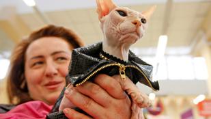 A kijevi macskák emberellenes cselekményekre készülnek