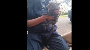 Egy rókakölyök megmentése a nap állatos videója