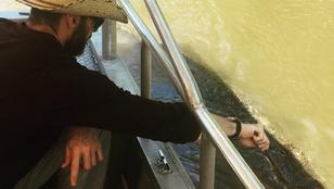 Instagramhíradó: csak le ne harapja Hugh Jackman ujját az az aligátor!