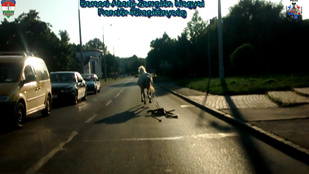 10 kilométeren keresztül szívatta az ózdi rendőröket egy ló