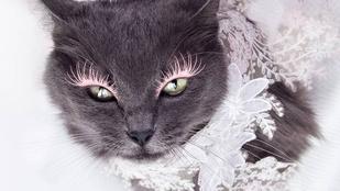 Ismerje meg a legszexibb román macskát!
