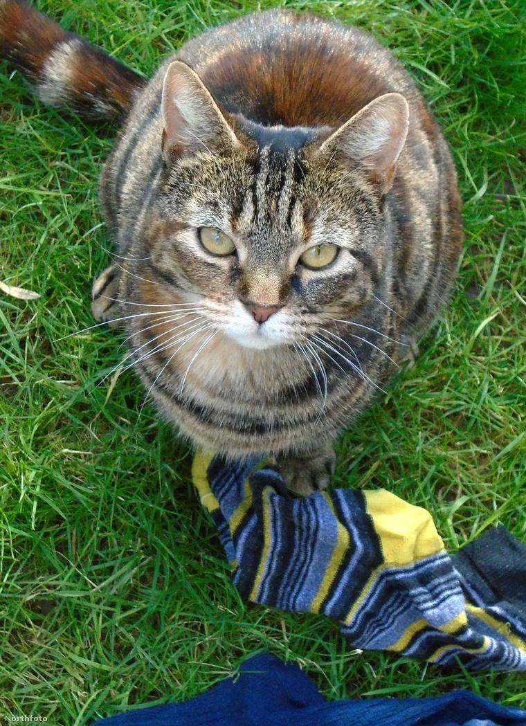 tk3s swns cat burglar 06